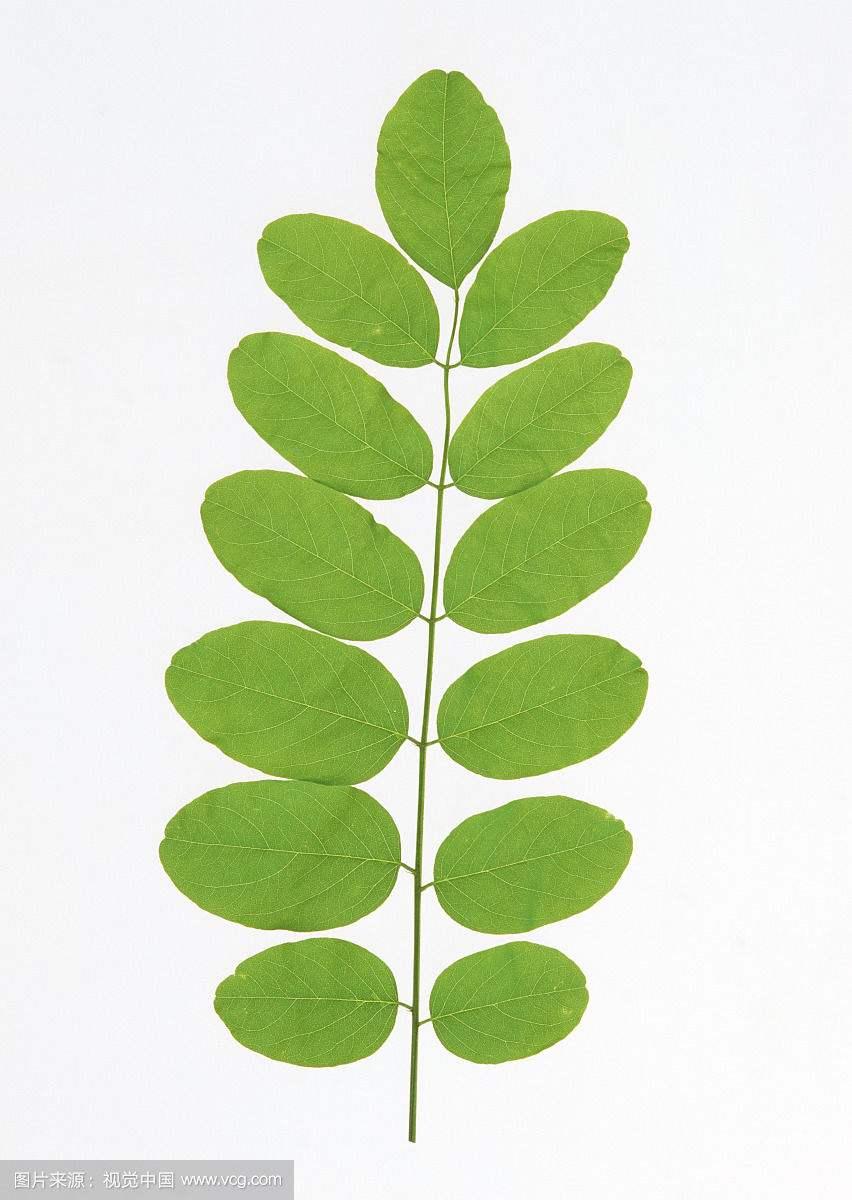 背景 壁纸 绿色 绿叶 树叶 植物 桌面 852_1200 竖版 竖屏 手机